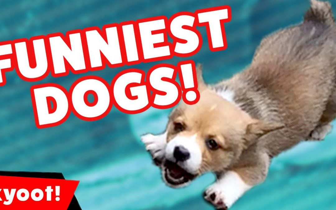 Try Not To Laugh At This Funny Dog VIdeo Compilation of 2016 | Kyoot Animals