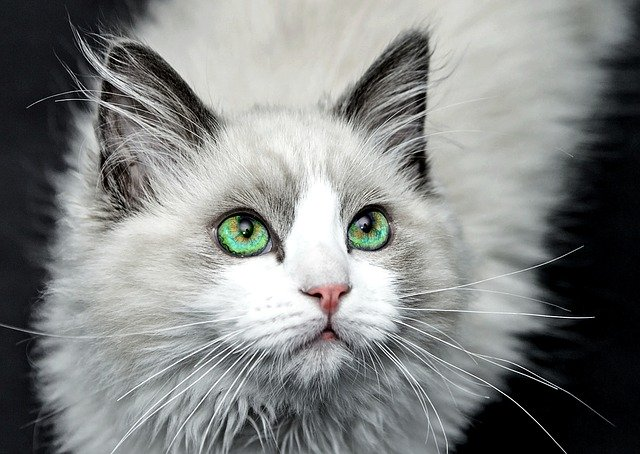 Care For Your Cat With These Essential Tips