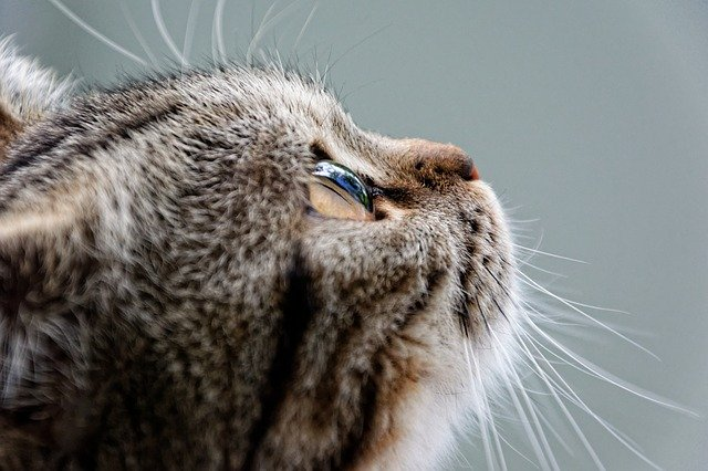 Cat Lovers: Be Sure To Read This Now!