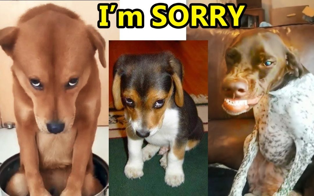 Guilty DOG Face Reaction – Guilty Dogs Video Compilation 2020
