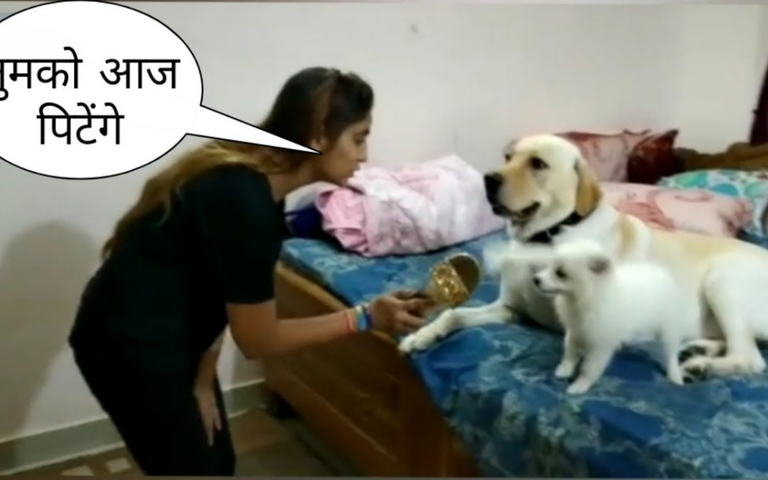 Tik Tok on all cute and talented dog 🐕    funny    by Shaqib