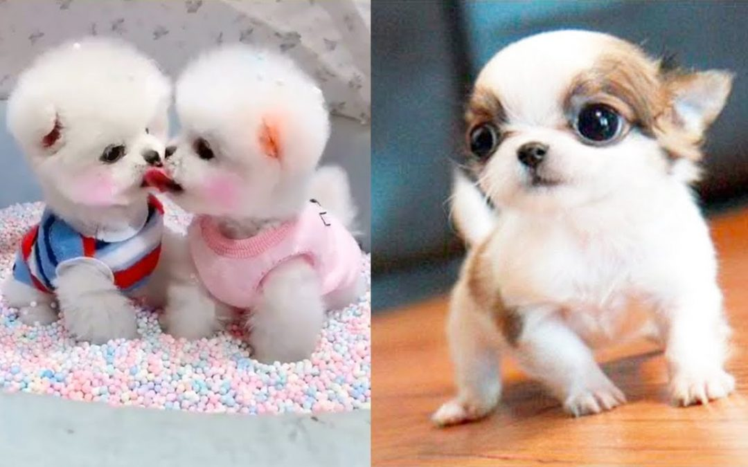 Baby Dogs – Cute and Funny Dog Videos Compilation #3 | Aww Animals