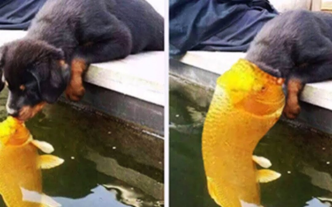 😆 Funny Dogs Meeting Cute Other Animals Compilation 🐶🐠