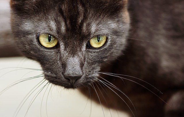 Need Some Tips On Cat Care? Read On.