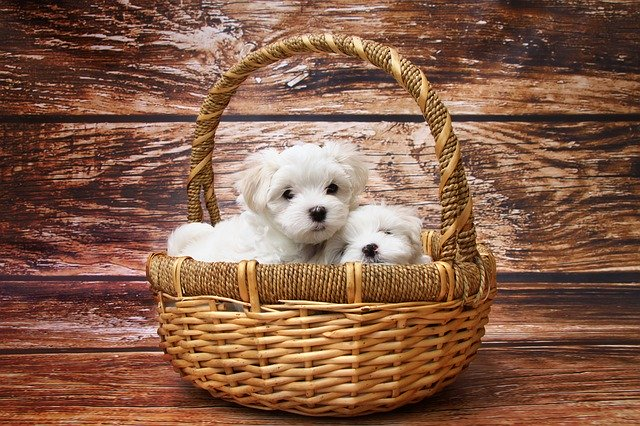 Techniques And Hints For Effective Puppy Training