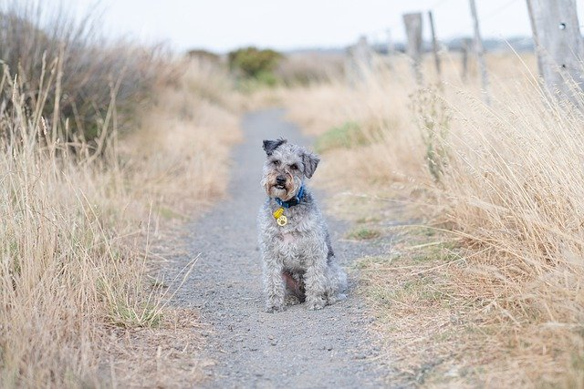 If Your Having A Difficult Time Training Your Dog, Try These Suggestions