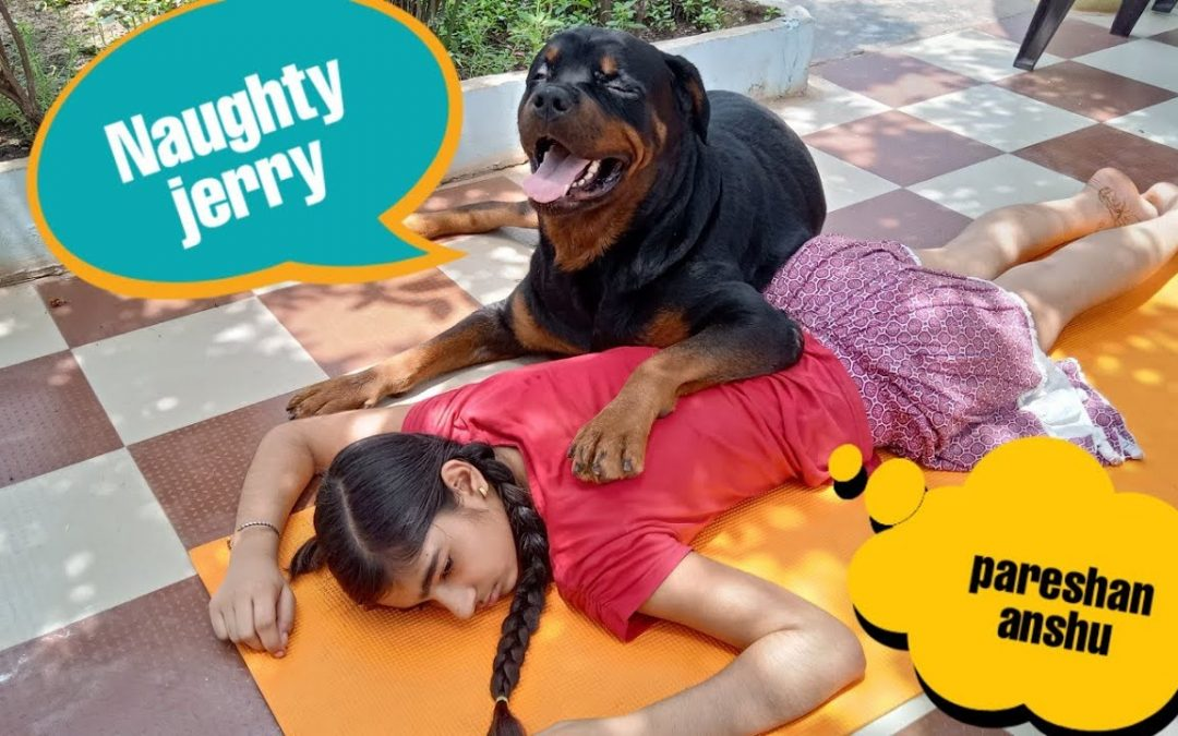 Naughty jerry is a thief||funny videos||funny dog ||cute dog.