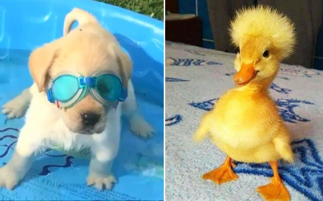 Baby Animals 🔴 Funny Cats and Dogs Videos Compilation (2020) Perros y Gatos Recopilación #20