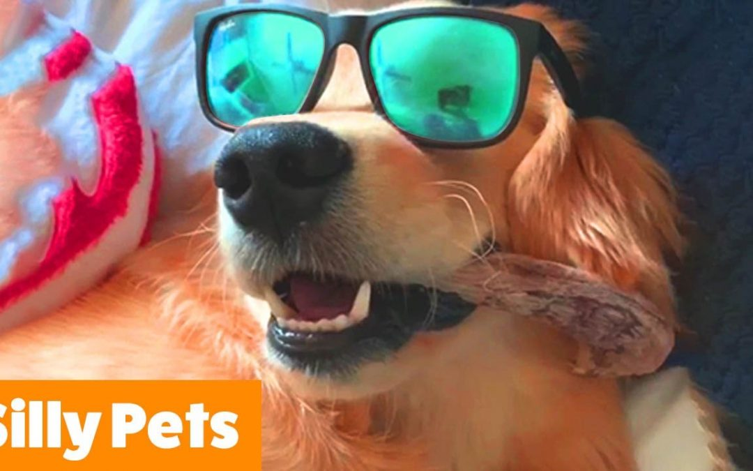 Silly Cute Dogs | Funny Pet Videos