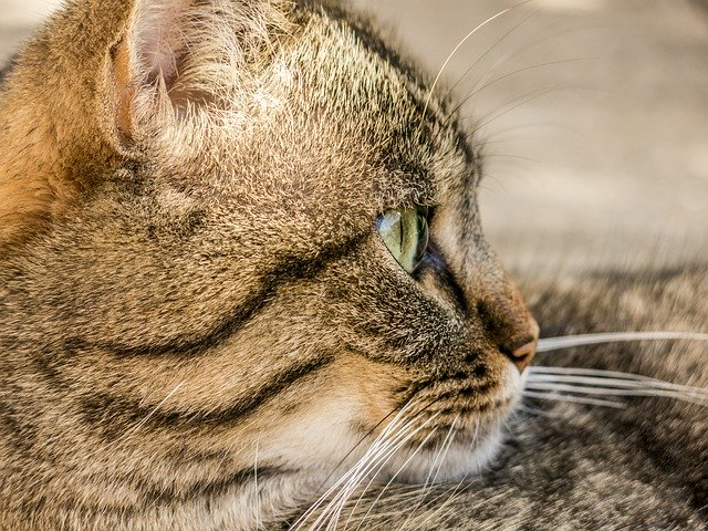 Solid Information About Cats Which Is Easy To Understand