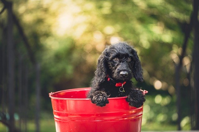 The Best Tips For Training Your Dog