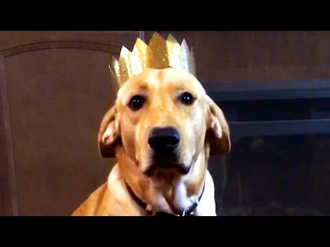 BEST DOG VIDEOS OF THE WEEK! Funny and Cute Dog Videos 🐶