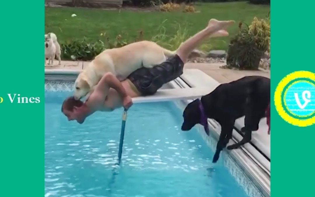 Try Not To Laugh Watching Funny Animal Fails Compilation November 2018 #1 – Co Vines✔