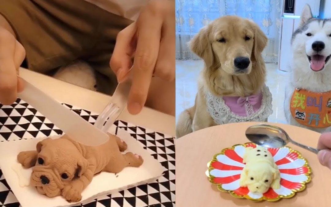 Chó Reaction Video Cắt Bánh Kem Hình Chó – Funny Dog Bánh Kem Reaction