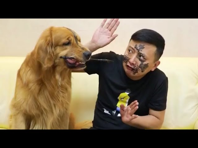 😂😂FUNNY VIDEO/FUNNY DOG