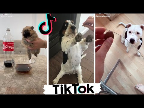 Funniest DOGS of TikTok Compilation ~ Try Not To Laugh ~ Cute Puppies TIK TOK