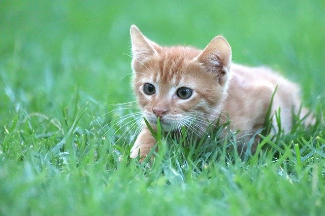 Caring For A Cat While Living On A Budget