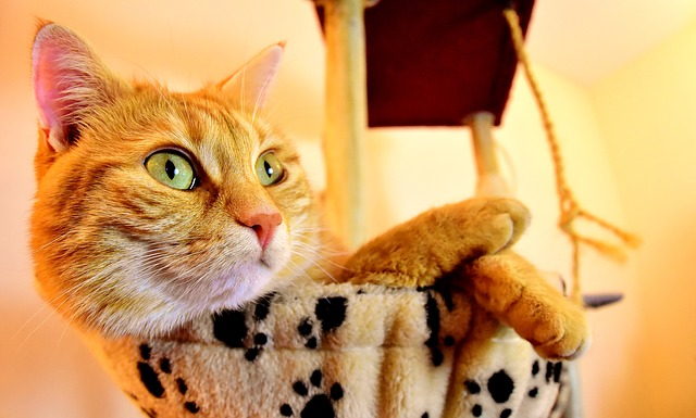 Do You Have A Domestic Cat? Read These Tips.