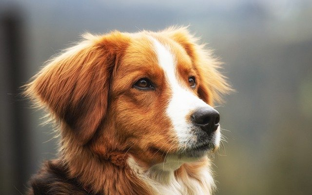 Everything You Ever Wanted To Know About Dog Training