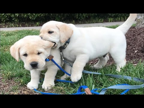 Funny Videos Animals – 🐶 It's time to LAUGH with Dog's life – Dog 2020