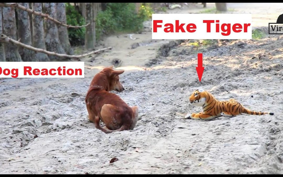 Dogs are so funny Reaction To Fake Tiger Prank ||  you will die laughing  Funny Dog compilation 2020