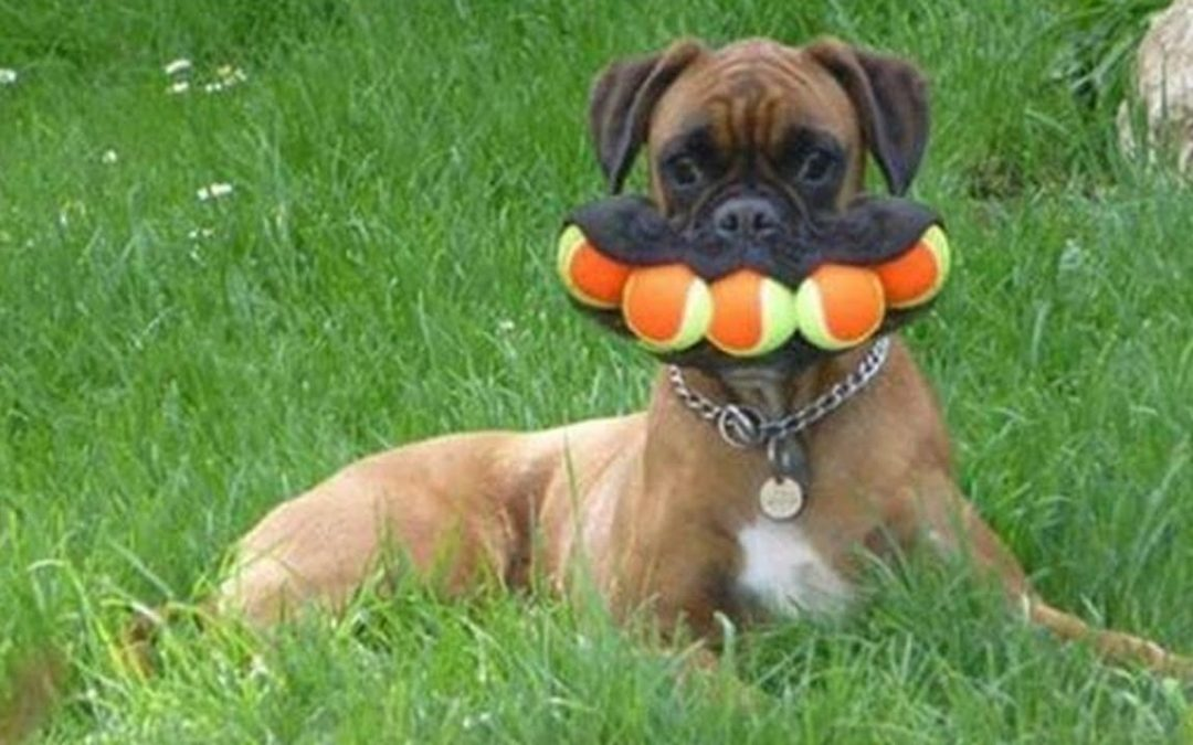 Funniest DOGS will make you LAUGH YOUR HEAD OFF –  Best FUNNY DOG Videos