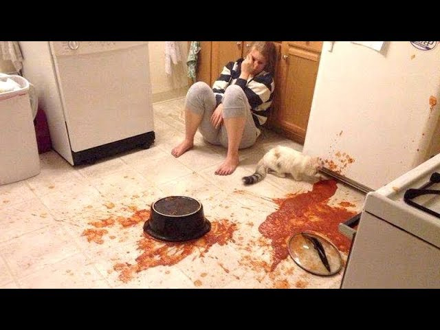 Owners are CRYING, you are LAUGHING! – Funny ANNOYING & TROUBLEMAKING ANIMALS