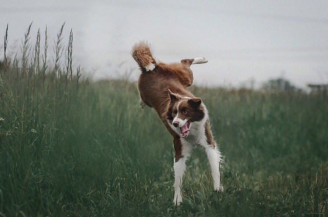 Training A Dog While Working A Full-Time Job
