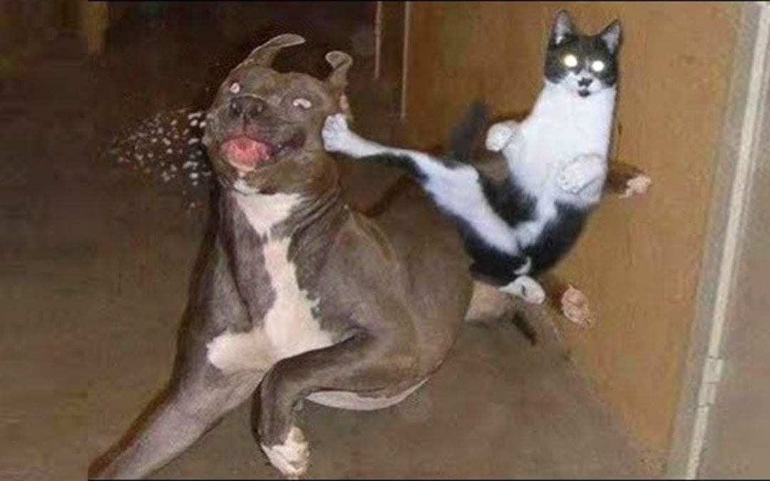 Funny Pets – Try Not To Laugh With Dog And Cat Video