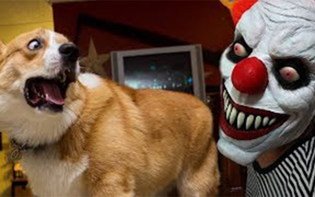 Funny Dogs And Cats At Halloween #2 – Skeleton Scares Cat And Dog