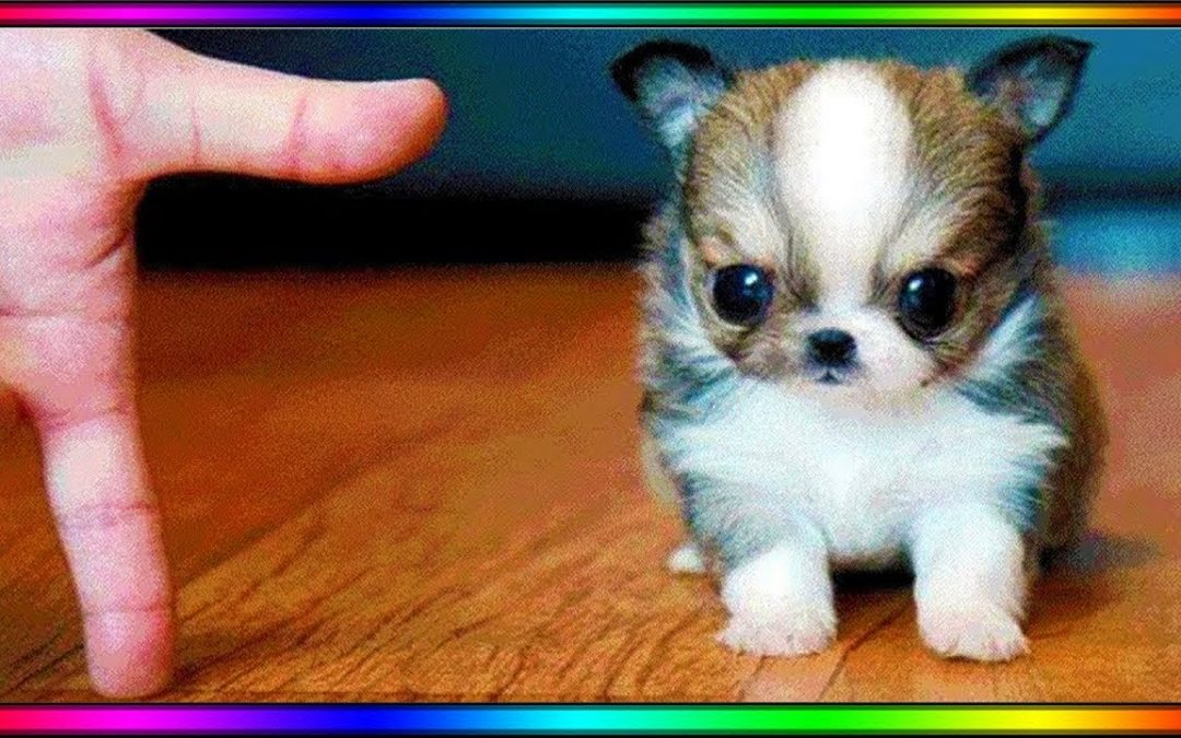 Baby Dogs – Cute and Funny Dog Videos Compilation #4 | Aww Animals