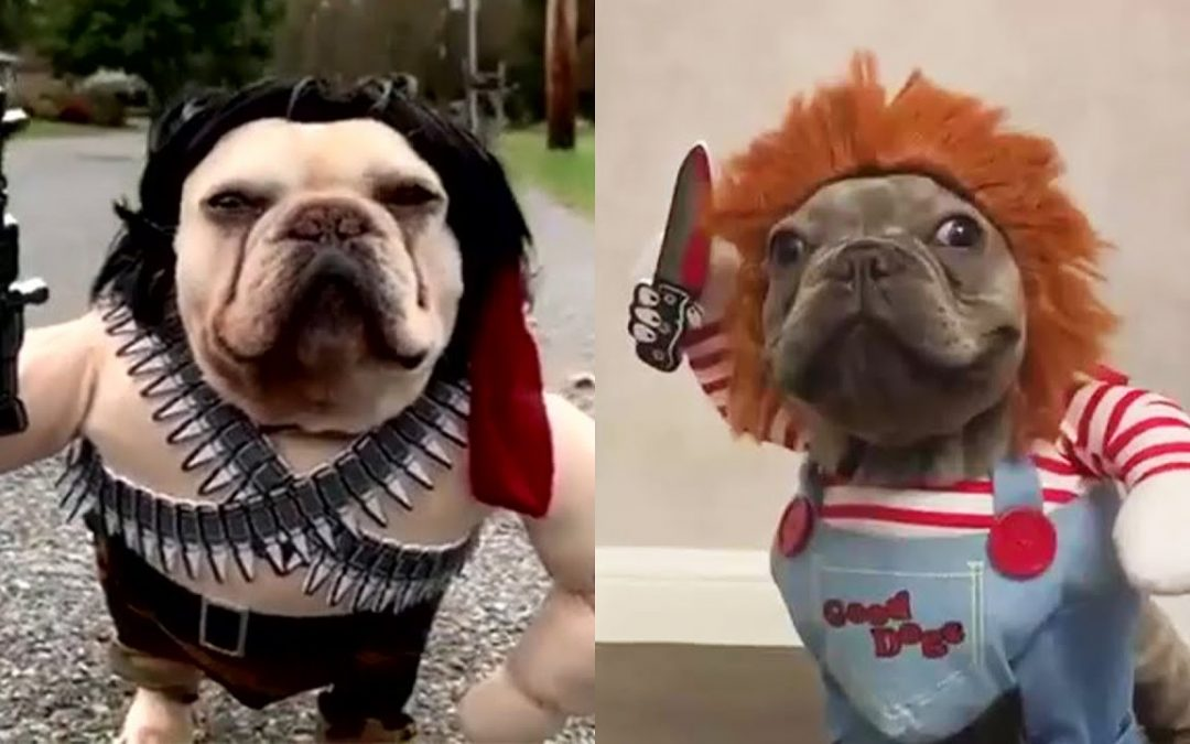 Cute Funny and Smart Pets Compilation Ep 02 – Pets House Video 2020