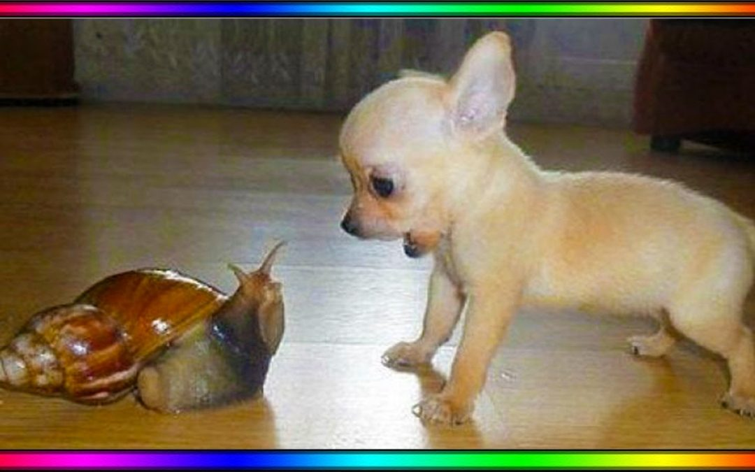 Baby Dogs – Cute and Funny Dog Videos Compilation #9 | AWW Animals SOO Cute!
