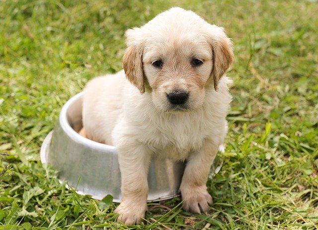 Puppy Training Basics For Any Family