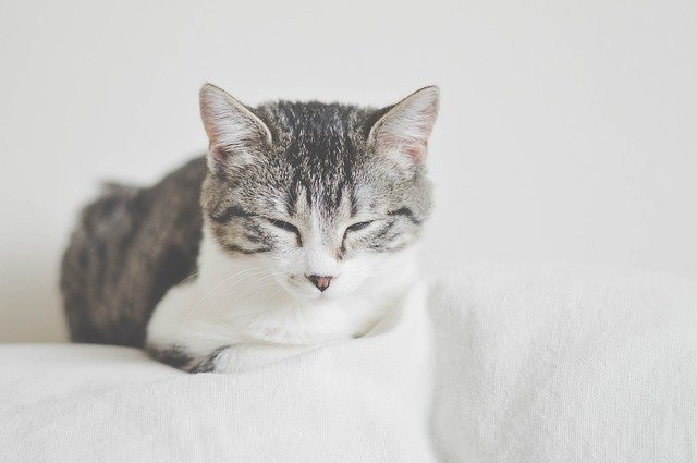 Better Understand Your Feline Friend With These Tips