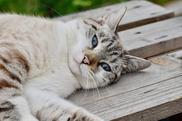 Great Advice About Cats That Is Simple To Follow