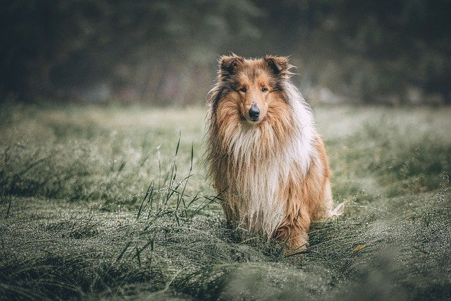 Helpful Hints For Teaching Your Dog To Listen