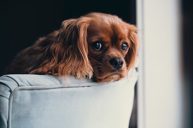 Train Any Dog With These Great Hints