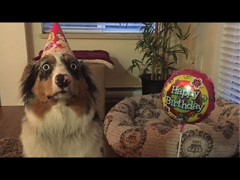 EXTREMELY DIFFICULT Try Not To Laugh Challenge while watching FUNNY DOGS VIDEO COMPILATION