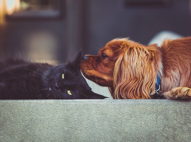 Best Ways To Tend To Your Pet Cat