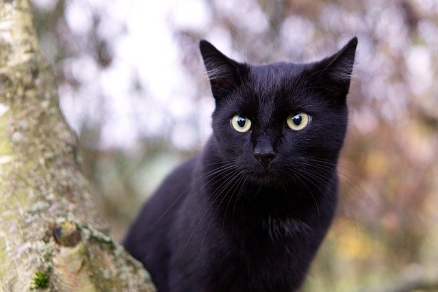 Your Cat Needs You: Cat Tips For New Owners
