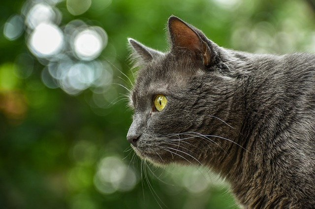 Have A Healthy Cat With These Suggestions