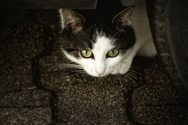 You Can Do It: Take Proper Care Of Your Cat