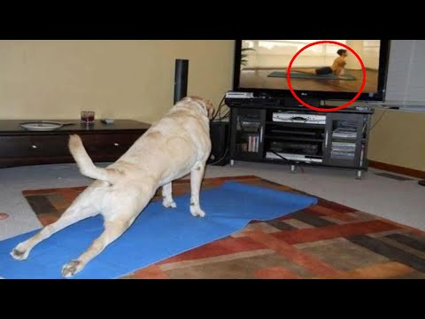 Funny Dog Videos | Laugh With Funny Dogs 😂 Funniest Pets Compilation