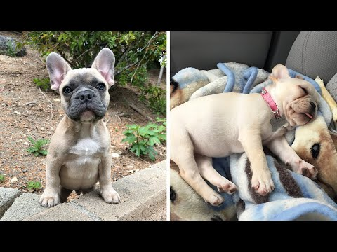 Baby Dogs- Cute and Funny Dog Videos Compilation #2