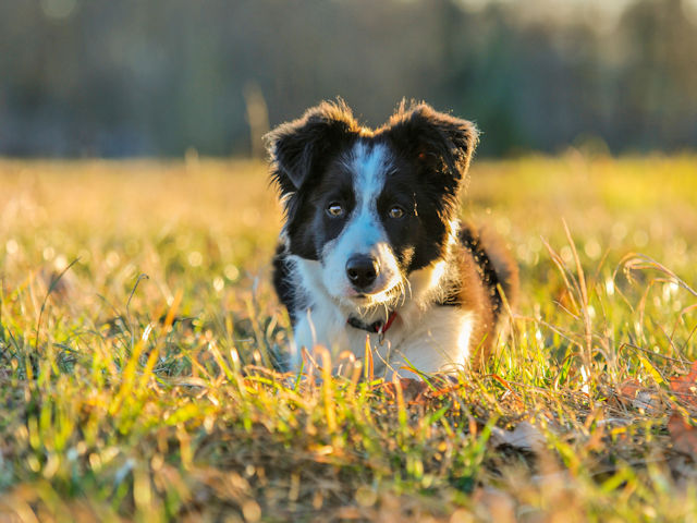 Expert Advice For Training Your Dog The Right Way