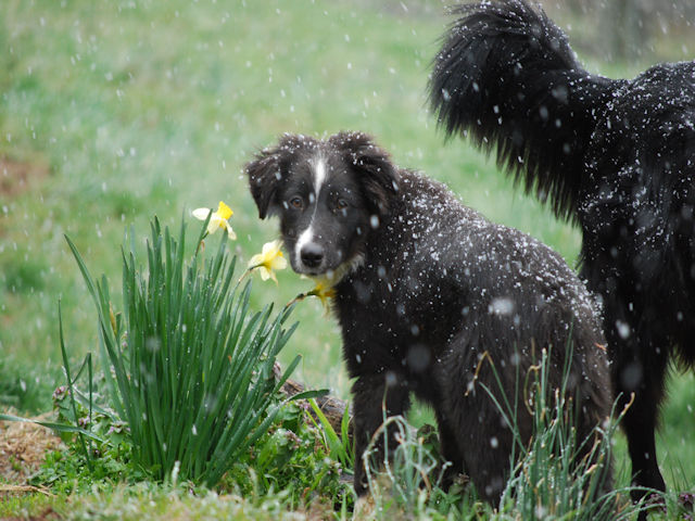 Beyond Fetch And Frisbee: Training Your Dog