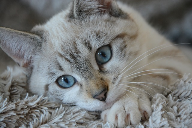 If You Have A Cat, Read This Article