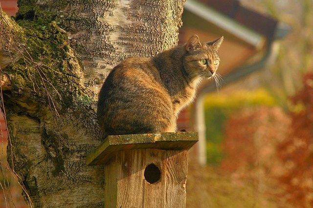 Want To Adopt A Cat? Give These Tips A Look