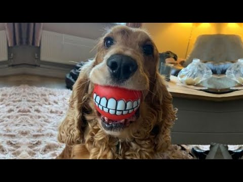These are some of best FUNNY DOG videos in 2021 –  TRY NOT TO LAUGH FUNNY VIDEOS